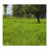 Hạt Cỏ Ubon Stylo