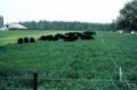 Hạt cỏ giống Yến Mạch cho mùa Đông